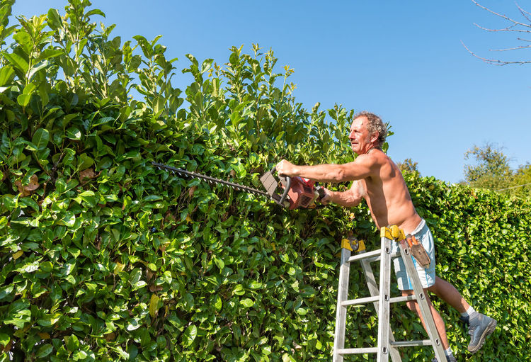 Full length of shirtless man cutting plants while standing on ladder