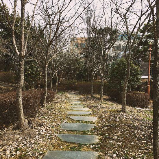 My school Tree Day Nature No People School Korea Gwangju