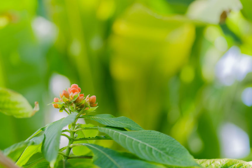 Leaf Plant Part Plant Growth Green Color Close-up Freshness Beauty In Nature Flower Flowering Plant Nature Focus On Foreground Selective Focus Fragility No People Day Vulnerability  Outdoors Petal Flower Head