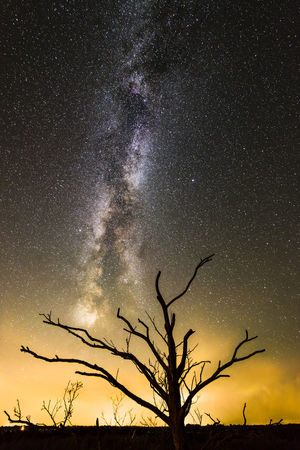 Lonely Tree Netherlands Nikon Astronomy Bare Tree Beauty In Nature Colour Of Life Friesland Galaxy Landscape Lauwersmeer Milky Way Nature Night No People Outdoors Samyang Scenics Silhouette Sky Space Star - Space Tree