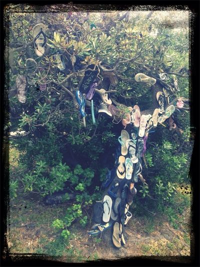 Thong Tree! Where All Loyal And Beloved Thongs Are Laid To Rest!