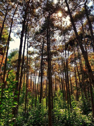 escape. Forest Fisheyelemag Somewheremagazine 35mm Lekkerzine Summersunselection Broadmag Back2thebase Minimalzine Verybusymag Justifiedmagazine Nature Woods Green