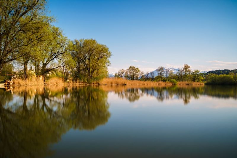 Water Reflection Scenics Lake Tree Tranquility Blue Beauty In Nature Waterfront Nature Growth Clear Sky Day Non-urban Scene Green Color No People Majestic Standing Water Long Exposure Smooth Evening Golden Hour Baldeggersee Schweiz My Favorite Place The Great Outdoors - 2017 EyeEm Awards