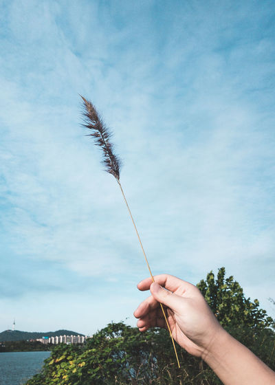 Seoul Cloud - Sky Day Hand Holding Human Body Part Human Hand Lifestyles Nature Outdoors Plant Reed Sky