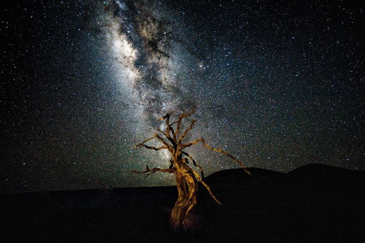Tree of Jah Hawaii Nightphotography Tree Astronomy Astrophotography Beauty In Nature Close-up Galaxy Jah Low Angle View Milky Way Nature Night No People Outdoors Scenics Sky Star Star - Space Tranquil Scene Tranquility Tree