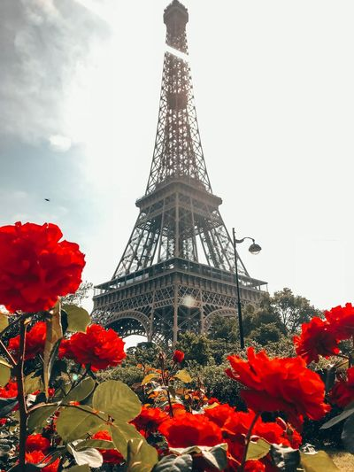 Eiffel Tower Sky Tower Built Structure Architecture Plant Nature Tall - High Travel Destinations Low Angle View Red Tourism City No People The Past Tree History Day Travel Flower Outdoors