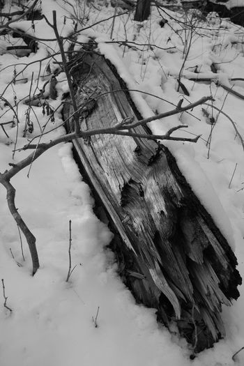 Fallen tree in the snow. Tree_collection  Wood Nature Photography Snow Eyem Nature Lovers  Eyem Nature Collection Naturephotography Blackandwhite