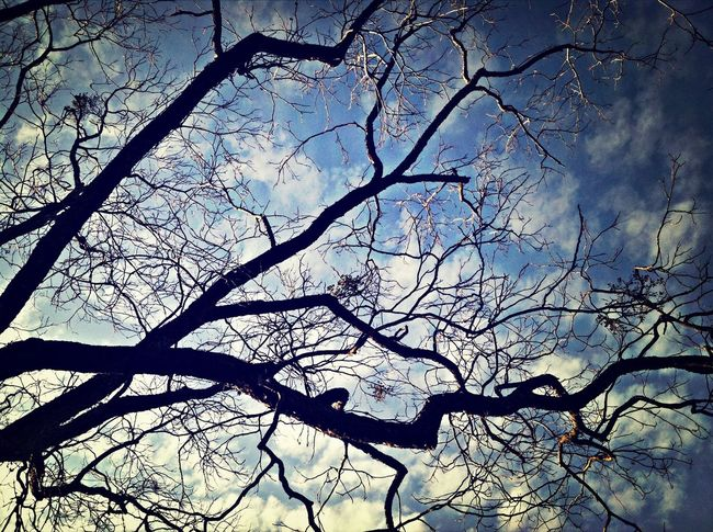 Leaf me alone..