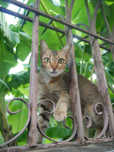 Portrait of cat by tree against plants