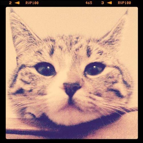Moo the kitten