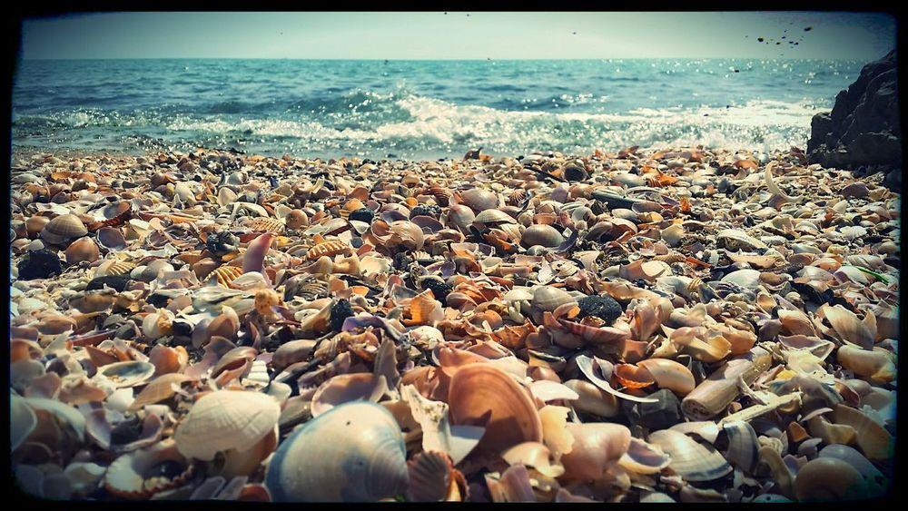 anzio beach by E.G.A.R. www.egarlab.eu Elastic Group Of Artistic Research Beach Summer Shell Anzio Anziobeach Nature