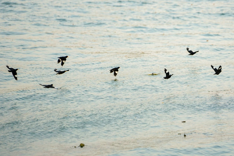 Group of motion blurred birds flying over the surface of the river