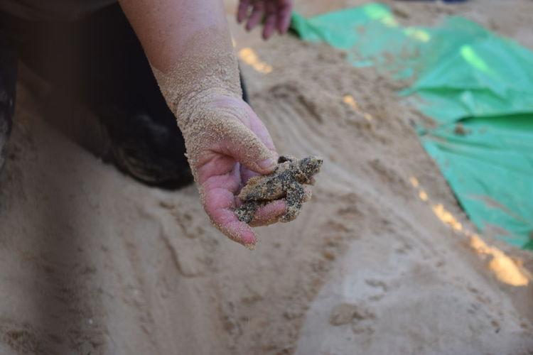 Cropped Image Of Person Holding Small Turtle At Beach