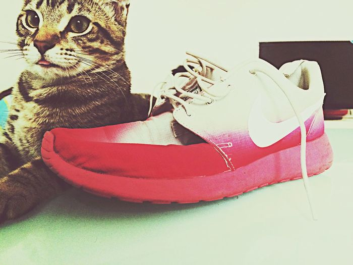Rosherun Ilovemycat Sneakers Kitten