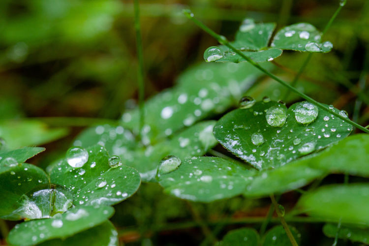 Drop Wet Water Leaf Green Color Plant Part Plant Rain Close-up Growth Nature RainDrop Beauty In Nature No People Dew Focus On Foreground Freshness Day Outdoors Purity Rainy Season Leaves EyeEmNewHere