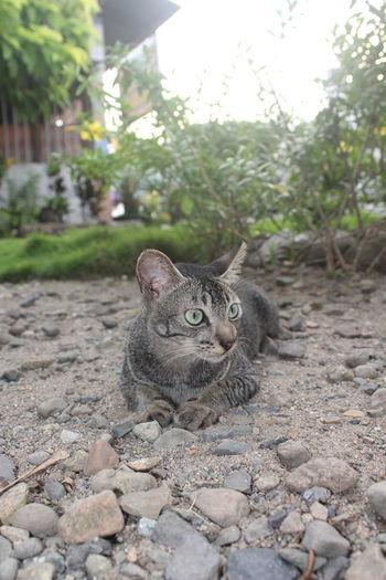 Portrait of a cat sitting on pebbles