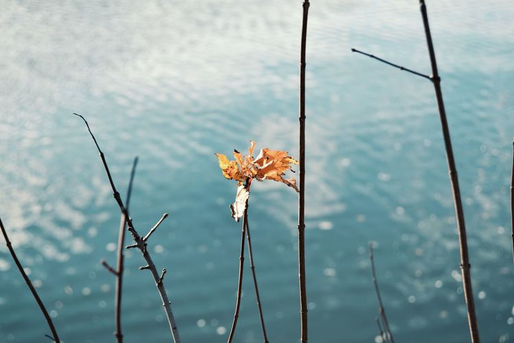 Leaf Autumn EyeEm Selects Flower Water Close-up Sky In Bloom Wilted Plant Plant Life Leaves