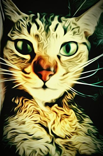 Cat Eyes Pink Nose Stripes Pattern Close-up Whiskers Green Eyes Manx Cat Manx Cat Lovers Cat Showcase: February Paint Edit