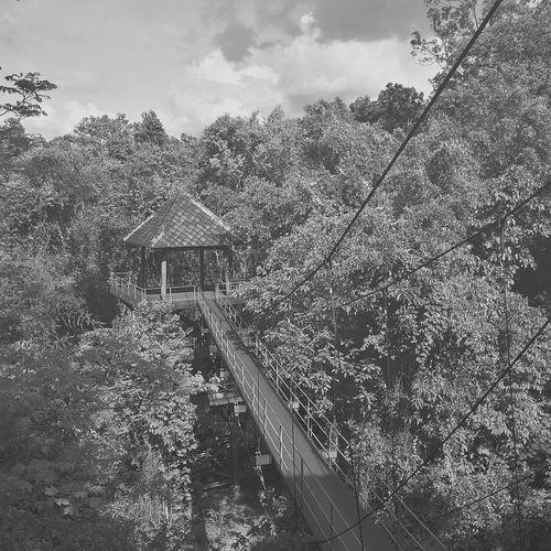 Blackandwhite Lifestyles Nature Mountain Light And Shadow Tree Thailand