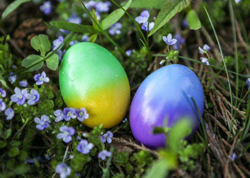 CELEBRATION DAY Eggs... Eggs Art Beauty Is Everywhere  Delicate Plants Blue Flowers Green Leaves Easter Flowers Easter Decoration Object In Foreground Tow Objects Green And Blue Colour No People Outdoors Easter Eggs Colored Eggs