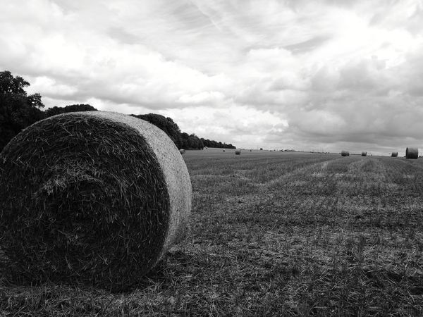 Champs Fields Roulebaleur Agriculture Field Beauty In Nature Landscape Tranquility Nature Bale  Hay Bale Tranquility Nature Agriculture Beauty In Nature Backgrounds Rural Scene Outdoors No People Day Sky Growth