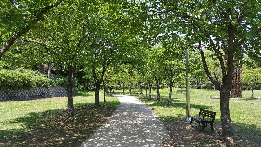 산책하기 참 좋은 날씨다🎵 Happy Walking Tree Shadow Park - Man Made Space Walkway Grass Green Color