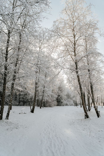 Snow covered trees on field