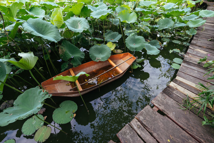 High angle view of potted plants floating on lake