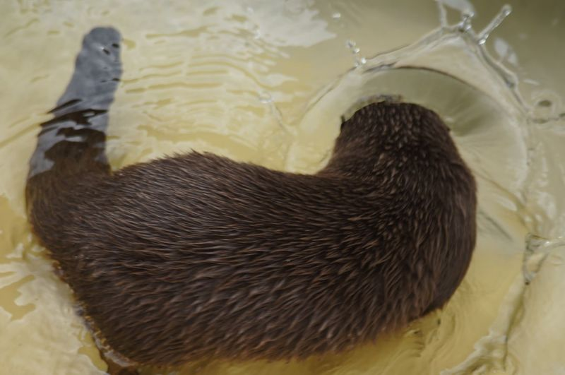 TheMoment-2015EyeEmAwards Otter SeaOtter