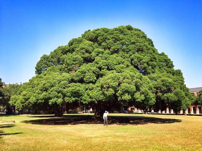 Man standing below huge tree on field against clear sky