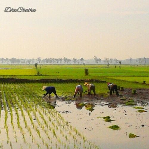 Selamat pagi para pekerja keras Orang_indonesia Indonesia_people Indonesiaku Instabestplus instajombang instanusantaraSurabaya joininstanusantara farmer indonesia morning