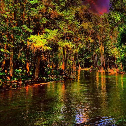 Always follow your heart and you'll live an inspired life!!! Taken at Ichetucknee Springs - May 10th, 2015. Hiketravelexplore Hike Travel Explore nature trees inspired positivethoughts followyourheart springs trees adventure outdoors forest tubing wanderlust roadtrip