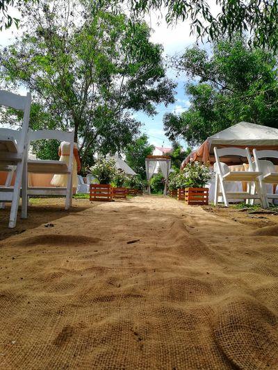 Tree Sand