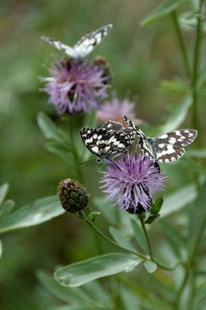 Nikon SudDeFrance Faune & Flore Insect Alpesdehauteprovence Entrevaux Nature