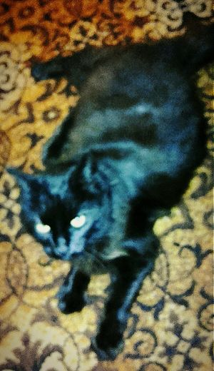 Black Cat Cats Black Cats Pussycat Cat Cats Of EyeEm Puddy Cat Pussy Cat Puddytats Puddytat Pussy Cats I'm Watching You Puddycat Puddy Tat BLackCat The Black Cat Cats 🐱 Cats Eyes Catsoneyeem Blackcats Cat Eyes Cat Watching Cat♡ I'm Looking At You Pusspuss
