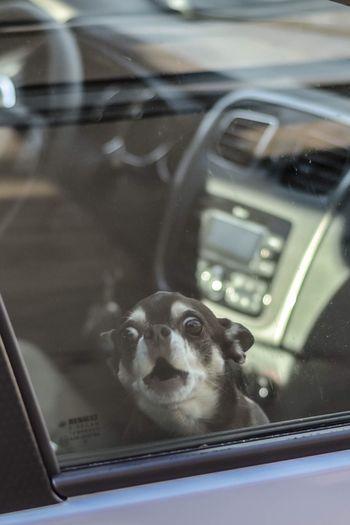 Portrait of dog seen through car window