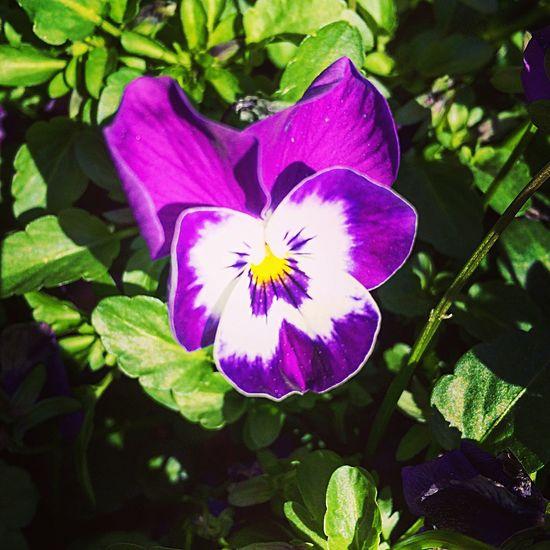 Flower Petal Fragility Freshness Growth Flower Head Beauty In Nature