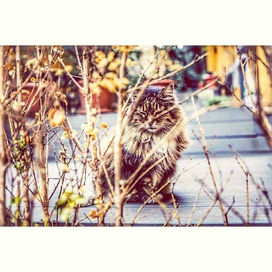 Istanbul Galatakulesi Kedi Aşkı 🎈👻