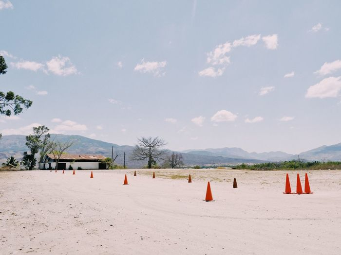 Trees No People Sky Dirt Hot Day Sunny Landscape Cones