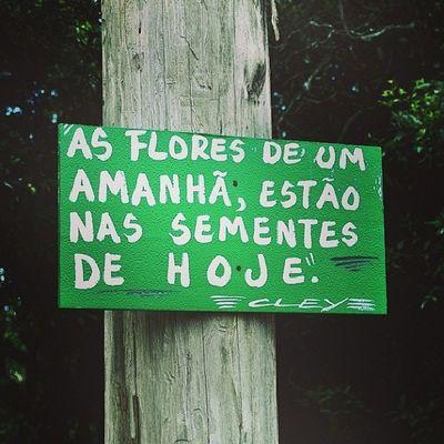 Plante o bem hoje, colha coisas boas amanhã! VivaAVida Bomdia Boasemana Seguiremfrente monday instalink instapictures viverbem