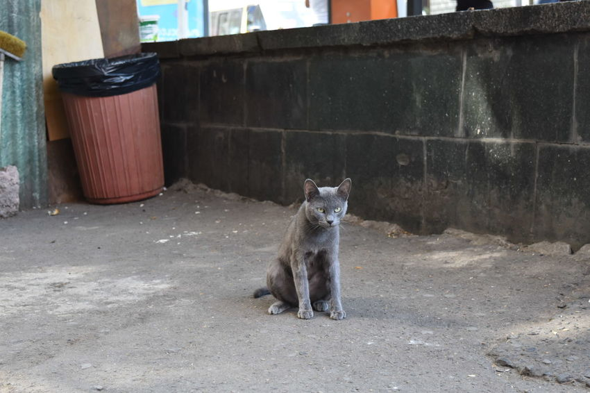 City Strolling On A Hot Day Cat Grey Cat Lovely Creature Sweetnessoverload