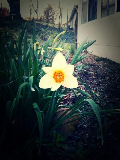 1st wild flowers of spring Wildflowers Spring Flowers Spring Has Sprung