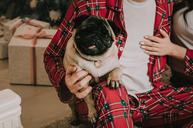 Midsection of man holding small dog