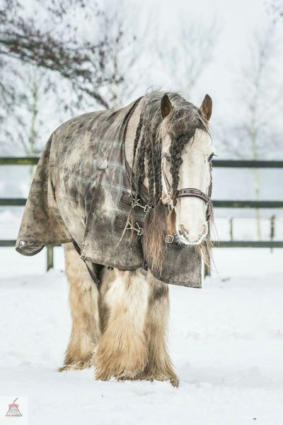 How's The Weather Today? Canonphotography Canon 70-200 F2.8 L IS-II Canon5dmarkiii Tinker Irishcob Snow ❄