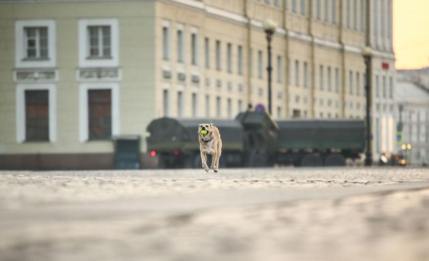 Dog walking on street in city