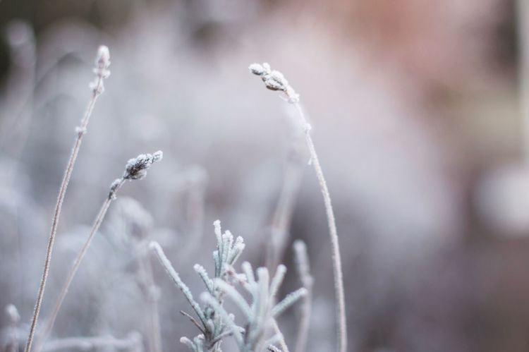 Growth Nature Focus On Foreground Plant Beauty In Nature Close-up Drop Outdoors Freshness Day No People Fragility Flower Water Animal Themes Beauty In Nature Canon_photos Winter Canon EOS 70D 50mm F/1.4 Canon 70d Canon_official Canon Eos  Canon Bokeh