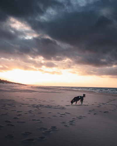 View of dog on beach against sunset sky
