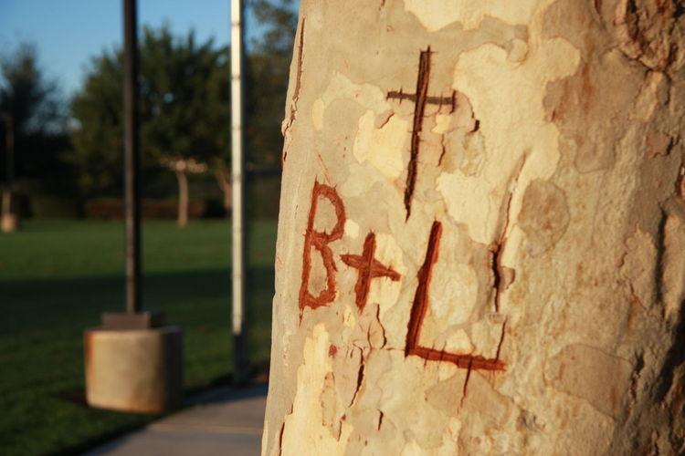Tree Graffiti Carved Tree Trunk Love B+L