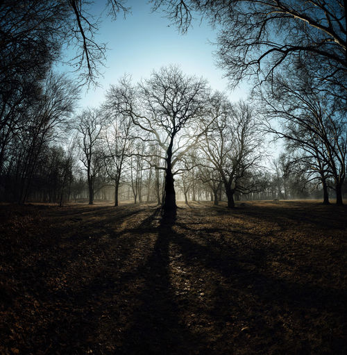 Branches Morning Mystic Nature Tree Trees Blue Sky Forest Shadows Wideangle Woods