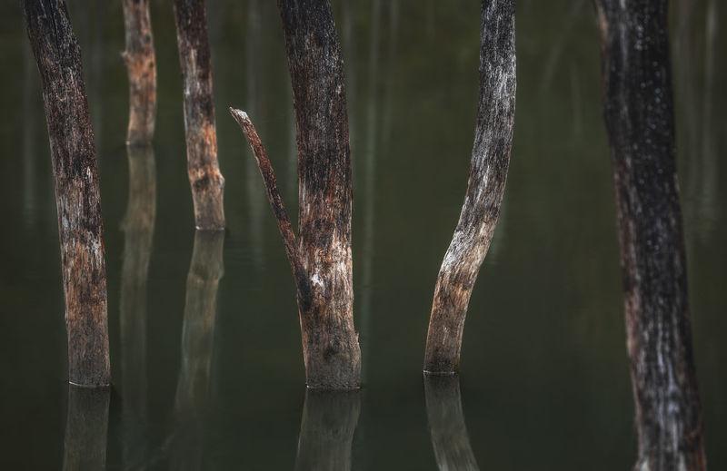 Cuejdel natural lake in the autumn season.